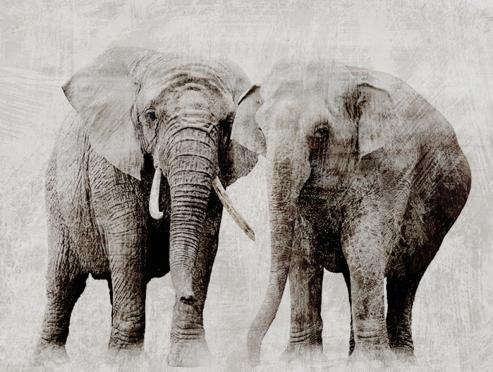 Fototapeta Afrykańskie Słonie retro do salonu