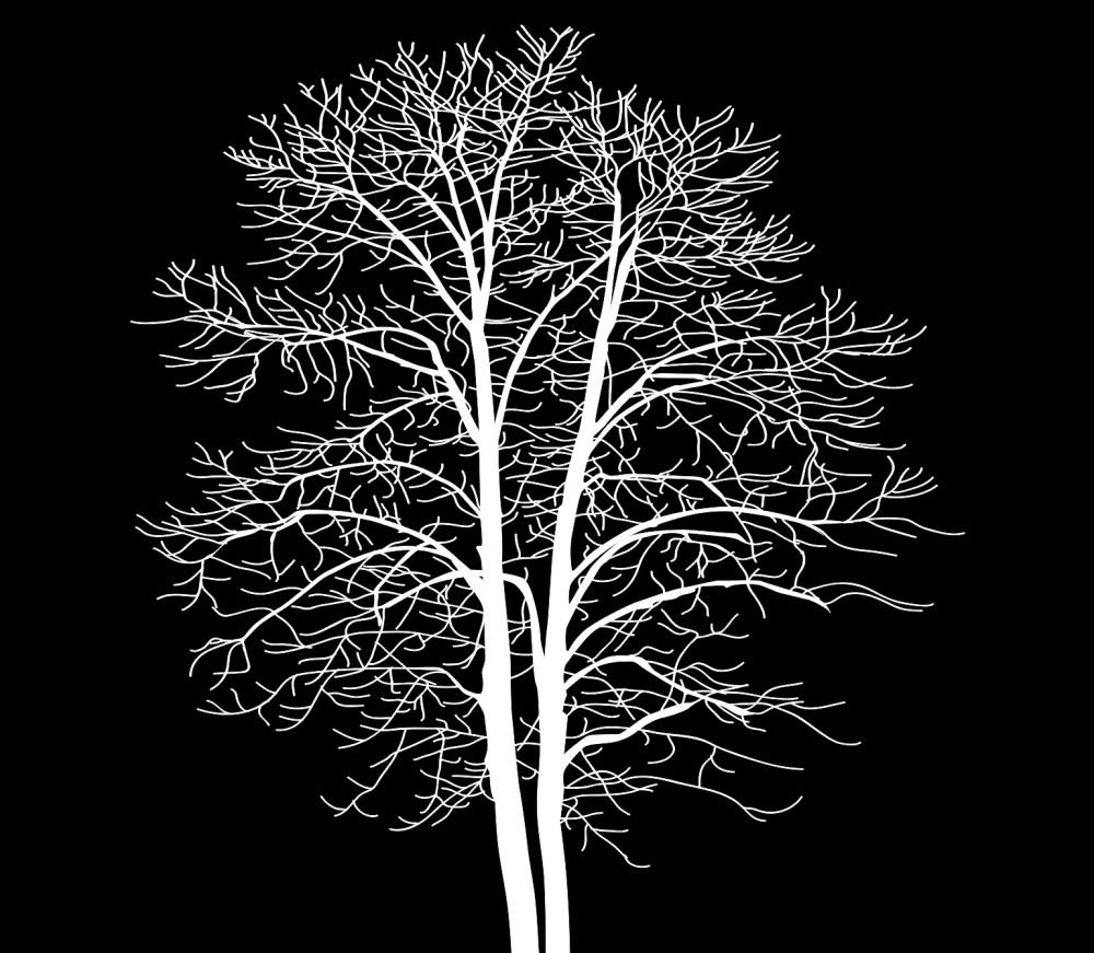 Fototapeta białe drzewo