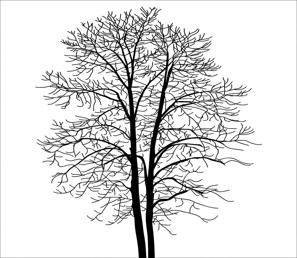 Fototapeta drzewo czarne