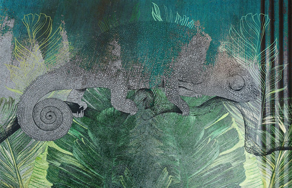 Kolorowy Kameleon 2B