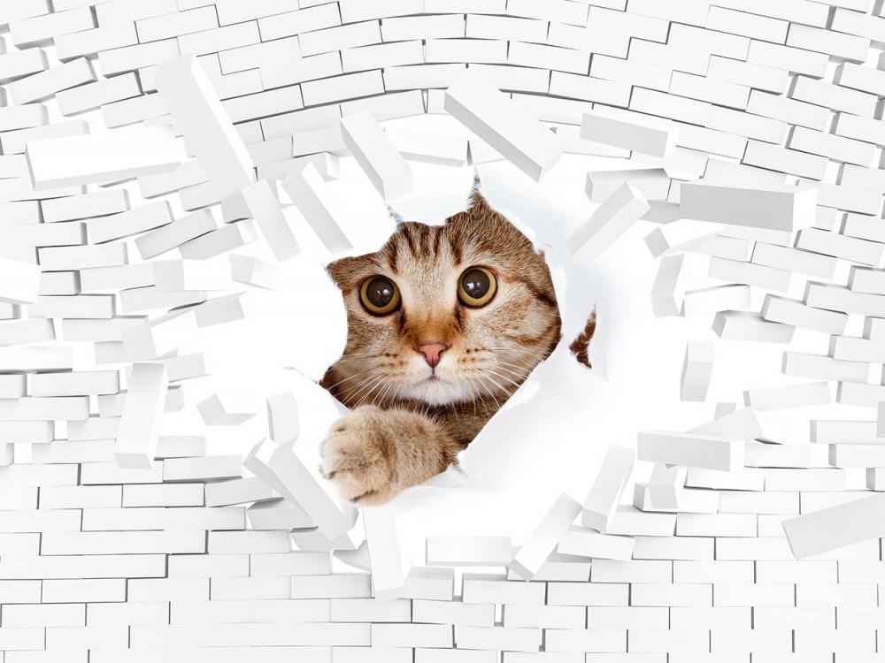 Fototapeta Kot i cegły