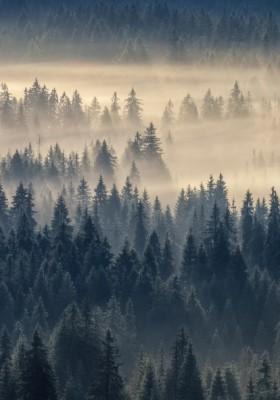 Plakat las mgła