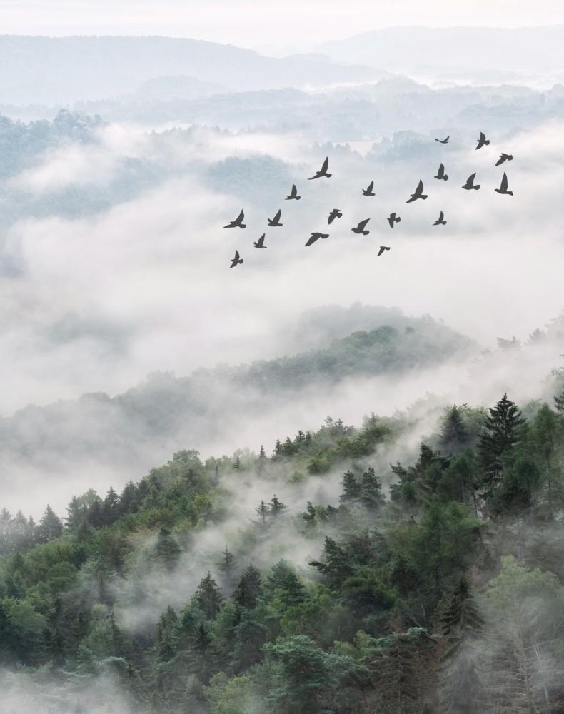 Ptaki nad leśnym wzgórzem